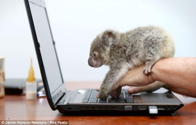 practical software training in australia